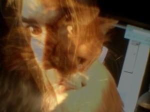 Cat Meld
